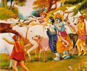 krishna-cows